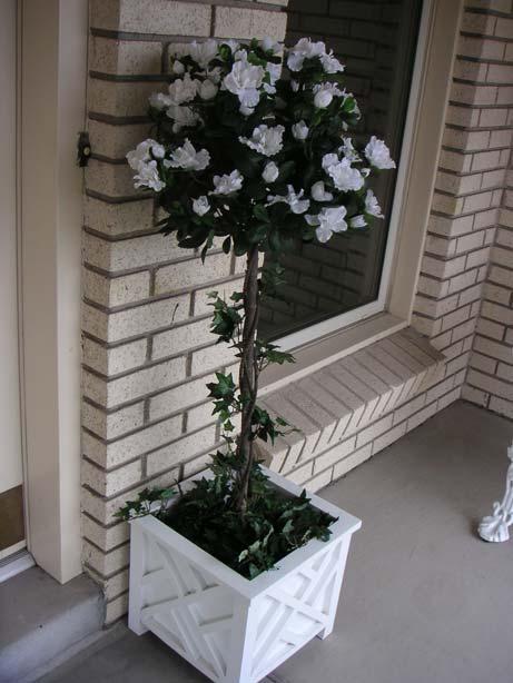 Azalea Topiary